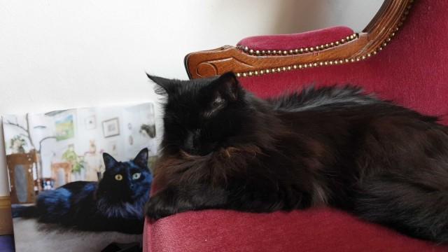 Piki-Nelli on asunut kissakahvilassa sen avautumisesta saakka