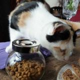 Vaikka kissat maistelisivat mielellään ihmisten herkkuja, heille saa antaa vain kissoille sopivaa ruokaa, kuten kissanraksuja