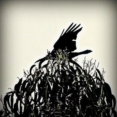 Crow Tree on Tamil Nadun vuoristossa Intiassa otettu valokuva. Kuva: Lamppu Laamasen valokuva-arkisto.