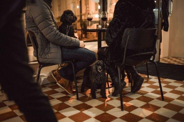 Koirat ovat tervetulleita kahvilaan.