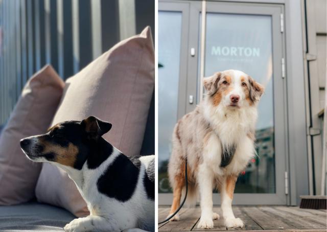 Koirakaverit ovat myös tervetulleita Mortonin terassille.