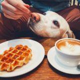 Koiraystävällisimmät ravintolat ja kahvilat - näihin paikkoihin lemmikit ovat enemmän kuin tervetulleita