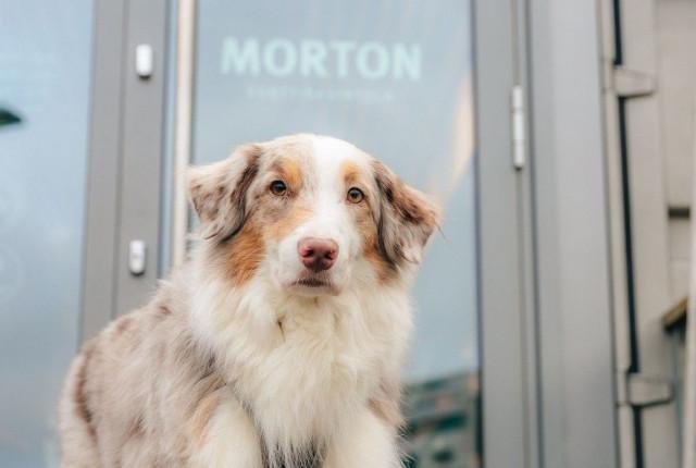 Mortonissa on aina tilaa myös koirakavereille.