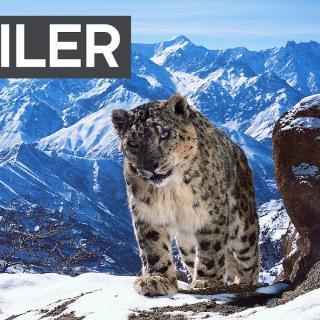 Planet Earth II -traileri saa aikaan kylmiä väreitä