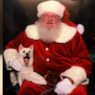 Koira tapaa suuren idolinsa, joulupukin ensimmäistä kertaa