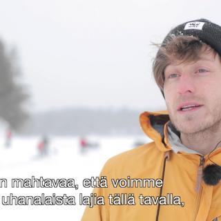 WWF Suomi kolaa apukinoksia saimaannorpan kuuteille