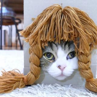 Kissalle rakennetut peruukkilaatikot saavat sen näyttämään entistä söpömmältä