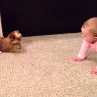 Koiranpennun ja vauvan keskustelu on kerännyt 17 miljoonaa katselukertaa