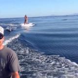 Nainen on vesilautailemassa ja yhtäkkiä vedestä nousee delfiinejä