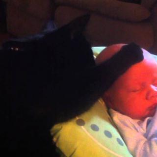 Video: Kissa paijaa itkevän vauvan uneen
