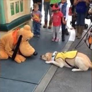 """Opaskoira pääsee Disneylandiin, jossa se tapaa """"Pluton"""" — eläin meinaa seota onnesta"""