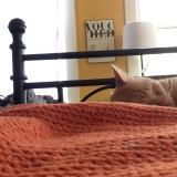 Kosto-miau: omistajansa öisin herättävä kissa saa maistaa omaa lääkettään