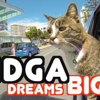 Tämä kissa lyö kaikki koiranomistajat ällikällä – mielettömiä temppuja