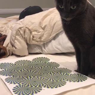 Kissa hämääntyy optisesta illuusiosta